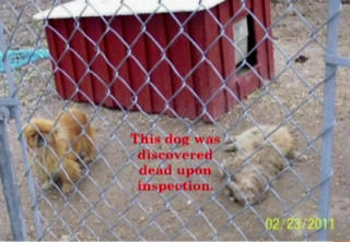 Speaker Karen Ankerstar showed the board this photo of dogs at a breeding operation she said had been inspected by the U.S. Department of Agriculture. Image courtesy Sarasota County
