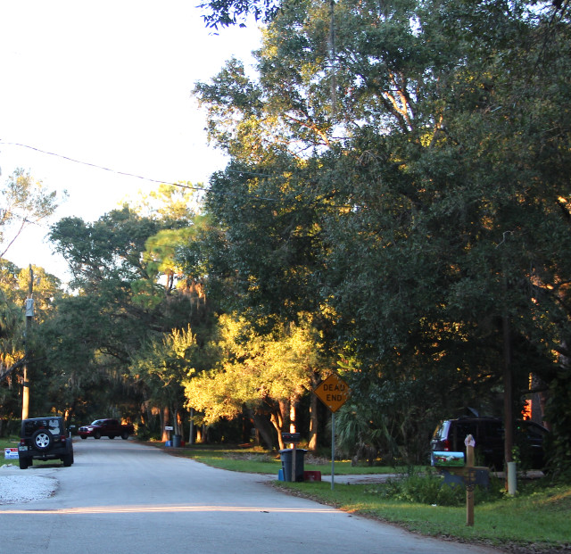 The sun begins to set over a canopy road north of Webber Road. Rachel Hackney photo