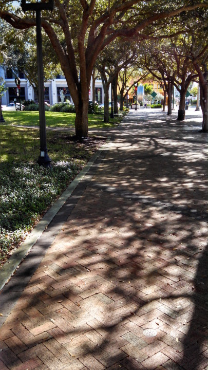 Oaks cast their shadows on the brick promenade adjacent to Five Points Park. Roger Drouin photo