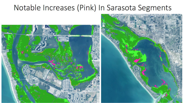 This chart shows increases, in pink, in Sarasota Bay. Image courtesy Southwest Florida Water Management District