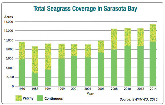 A graph shows details about seagrass coverage in Sarasota Bay. Image courtesy Southwest Florida Water Management District