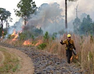 Fire Fest is set for Jan. 30. Photo courtesy Sarasota County