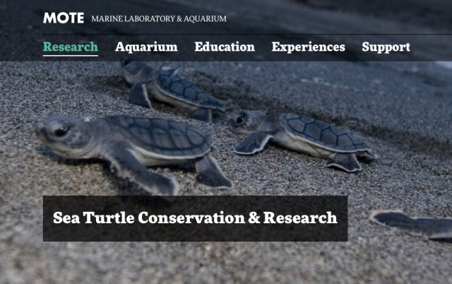 Mote Marine is known for its Sea Turtle Conservation & Research Program. Image from the Mote website