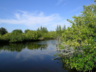 This vista is part of Curry Creek Preserve. Photo courtesy Sarasota County