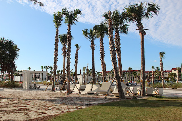 New cabbage palms area among the landscaping upgrades in Siesta Public Beach Park. Rachel Hackney photo