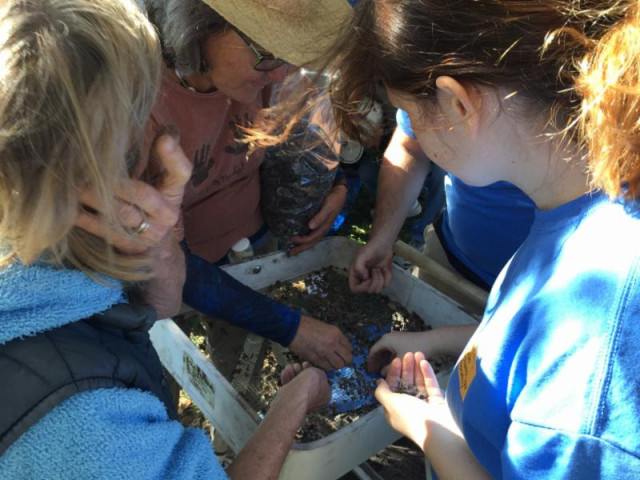 Archaeology experts and students sift through samples taken during a two-day excavation at Phillippi Estate Park in January. Photo courtesy Sarasota County