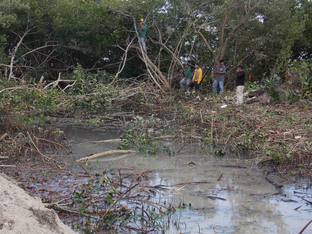 County staff dealt with unauthorized destruction of mangroves in South County in February 2014. Photo courtesy Sarasota County