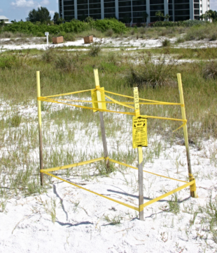 Sea turtle nests are marked with yellow stakes. Image courtesy Sarasota County