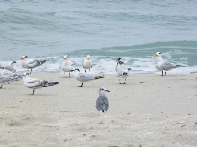The shore is well-populated with a variety of birds. Photo by Fran Palmeri