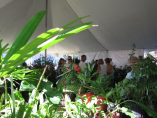 Participants browse plants during the ninth annual sale. Contributed photo