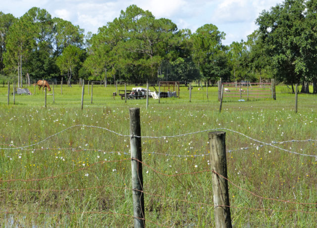 The beauty of a Lee County roadside is protected by a fence. Photo by Fran Palmeri