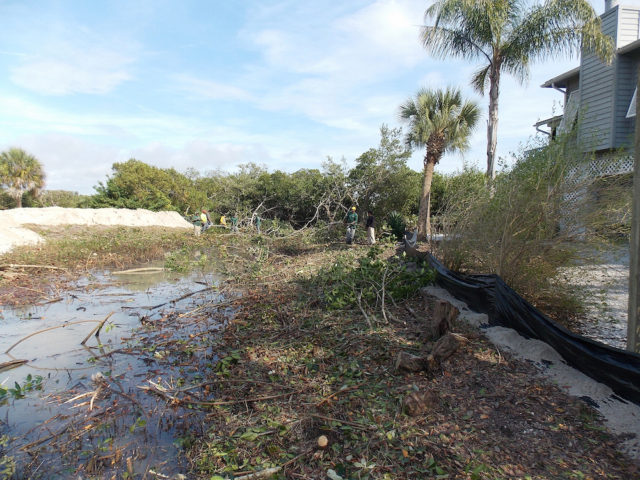 Mangroves that have been ripped from the shoreline lie on a Manasota Key Road parcel in 2014. Image courtesy Sarasota County