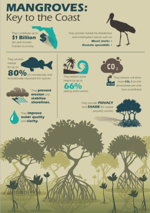 County staff produced this infographic about mangroves' importance to the environment. Image courtesy Sarasota County