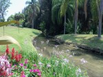 Warm Mineral Springs Stream Sarasota County photo