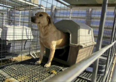Karen Ankerstar presented this slide showing a dog at what she said was a USDA-inspected breeding operation. It and another dog shared the kennel, she added, and neither could fit into the shelter provided. News Leader photo