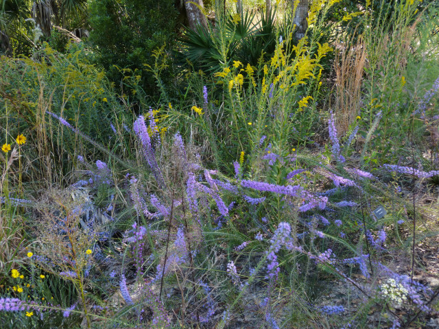 Blazing star and goldenrod. Fran Palmeri photo