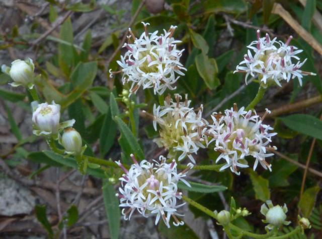 Flowers adorn Oscar Scherer State Park. Fran Palmeri photo