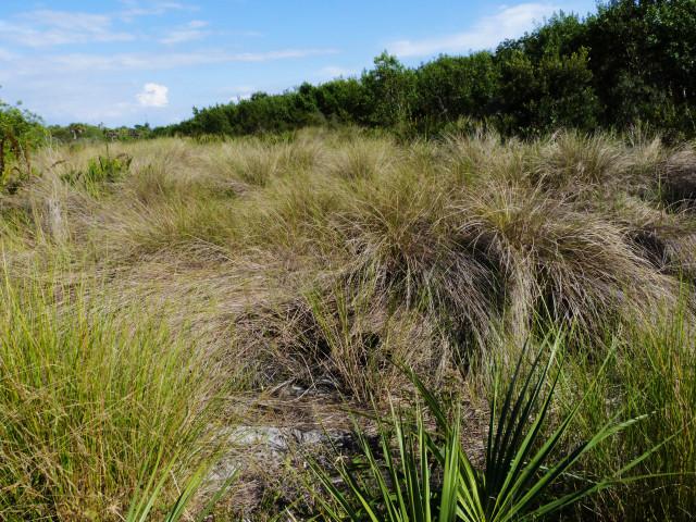 The Captiva Conservation Foundation's restored lands on Sanibel Island. Photo by Fran Palmeri