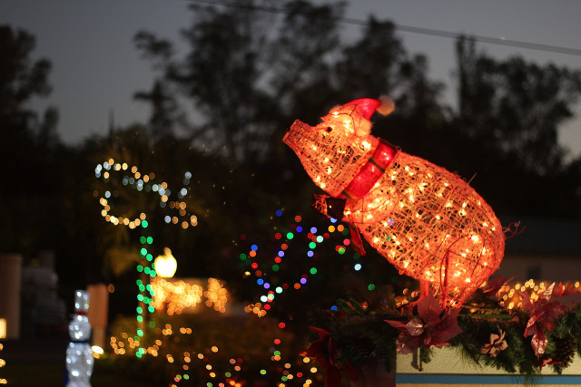 Beachaven's holiday pig has proven a popular decoration at Siesta condo complexes. File photo