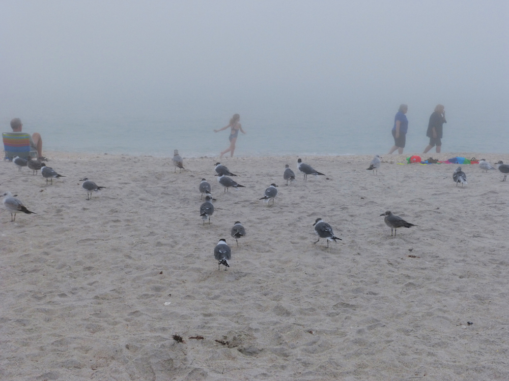 Fog steals the show from disappointed beachgoers.