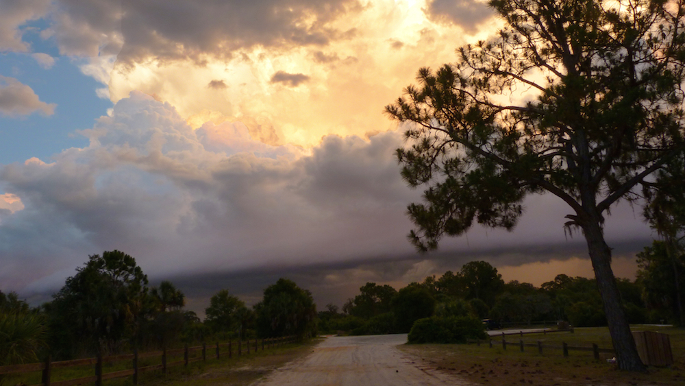 A thunderstorm closes in at Oscar Scherer State Park.