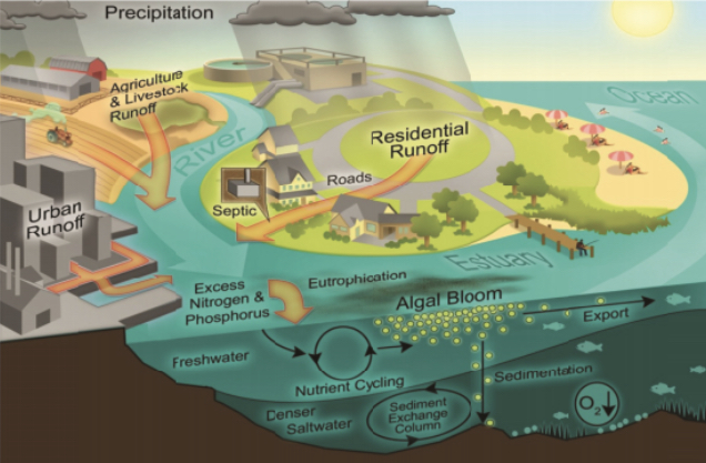 Many factors link climate change to waterborne diseases and water-related illnesses, the plan says. Humans may be exposed to pathogens or other contaminants through drinking water, seafood consumption or recreational or occupational water uses, it adds. Image from the National Research Council
