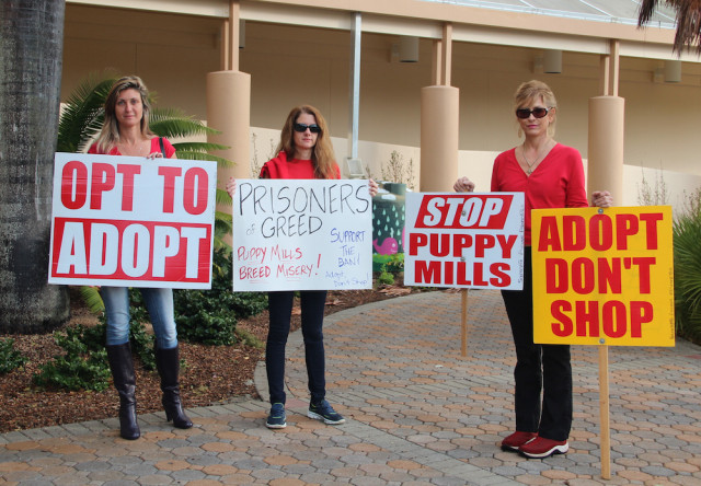 (From left) Carol Winterfeldt, Mary Donohue and Carolyn Repeta showed support for the ban as they stood outside the County Administration Center in downtown Sarasota on Jan. 27. File photo