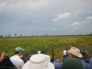 Visitors tour Orange Hammock Ranch. Image from the Conservation Foundation of the Gulf Coast website