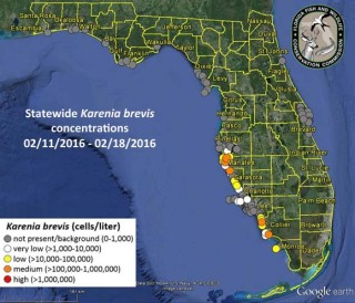 A Feb. 19 map posted on the Florida Fish and Wildlife Conservation Commission (FWC) website shows areas where red tide had been detected. Image from the FWC website