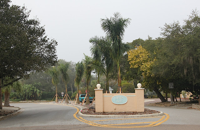 New royal palms stand in the right of way median on Shadow Lawn Drive. Rachel Hackney photo
