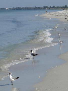 Waves roll in gently at Nokomis Beach. Photo by Fran Palmeri