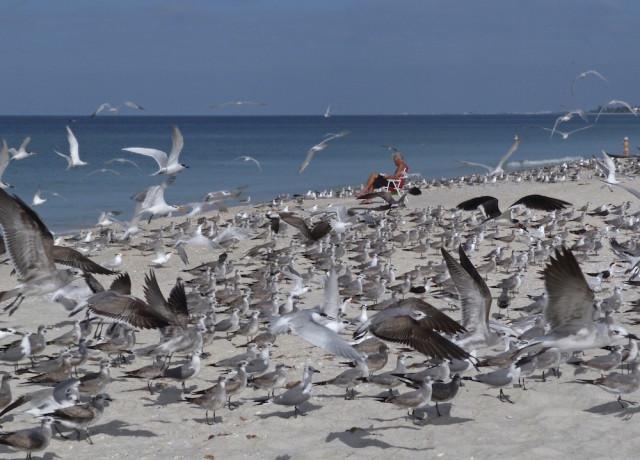 Gulls surround a solitary human beachgoer. Photo by Fran Palmeri