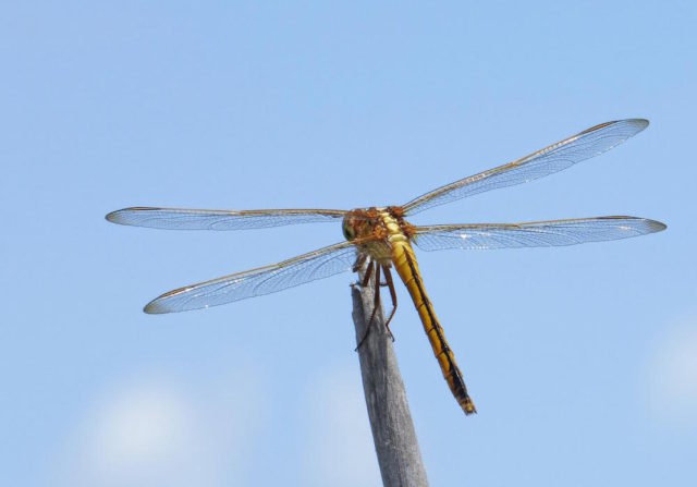 Dragonflies are common this time of year. Photo by Fran Palmeri